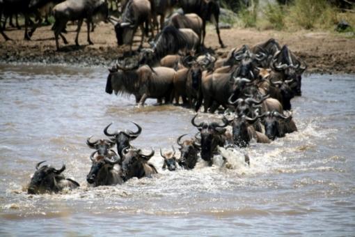 image-voyage-107-2410-ambiances_d_autrefois_pour_un_safari_en_tanzanie-700-0
