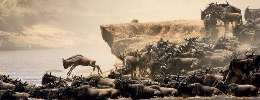 masai_mara_migration