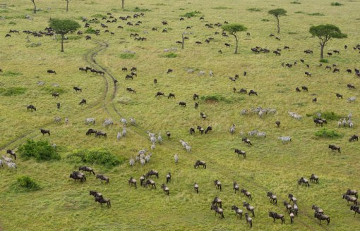 Masai_Mara_National_Reserve_050
