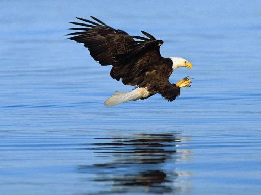Amazing-Eagle