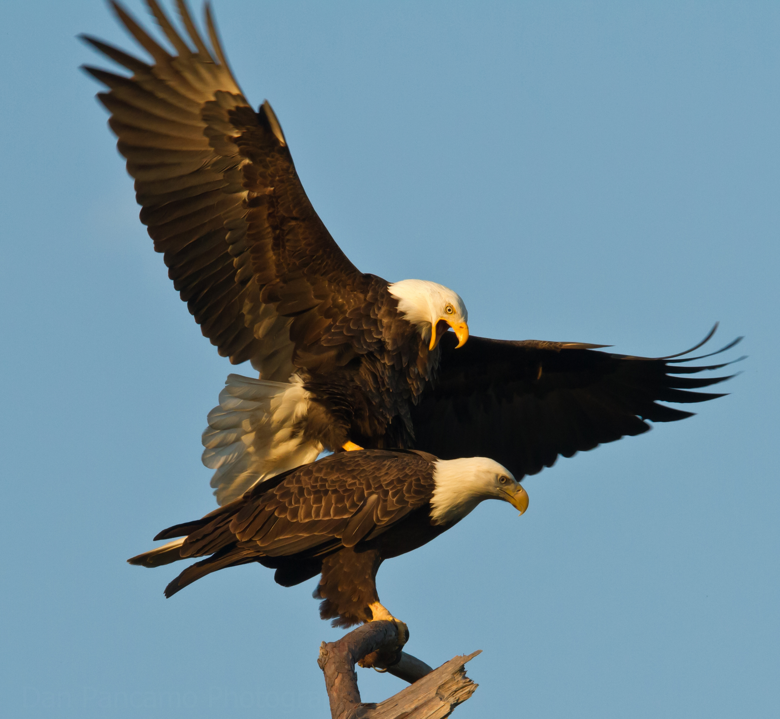 7 Highly Effective Habits of Eagles | pgcps mess - Reform Sasscer ...