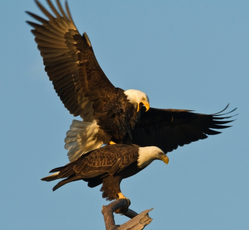 Baytown Bald Eagles  Fall 2010