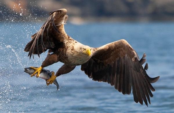 Qualities of an eagle bird