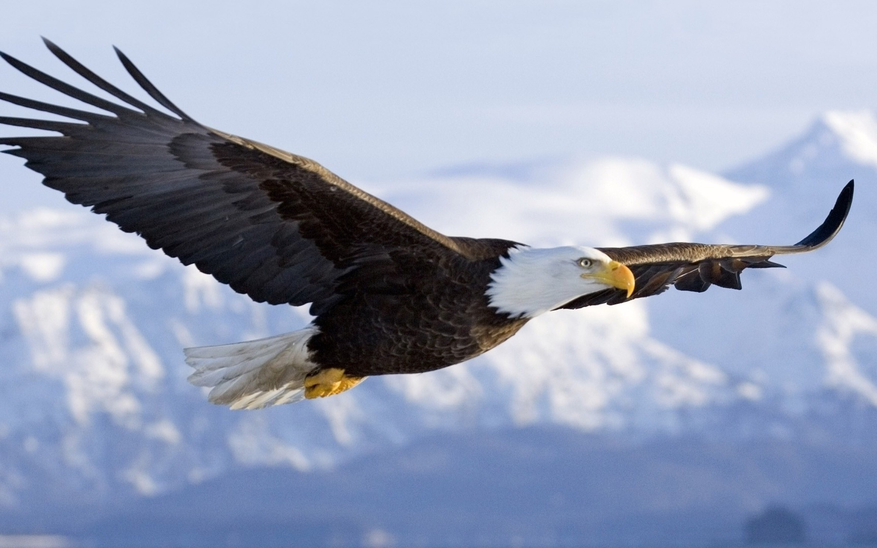 7 highly effective habits of eagles help change the world the 7 highly effective habits of eagles biocorpaavc