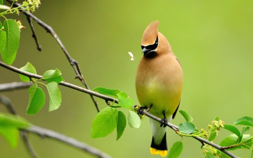Beautiful-Bird-Color-Cute