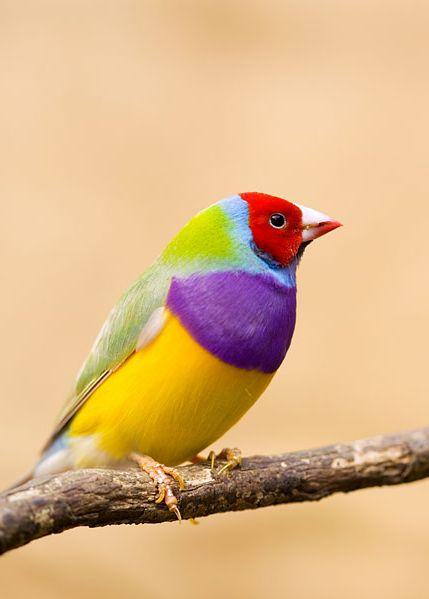 beautiful-birds-15