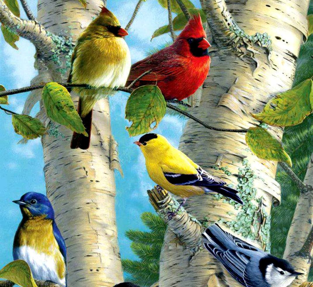 Tropical birds in color | Help Change The World. The Future Of The County Is Now.