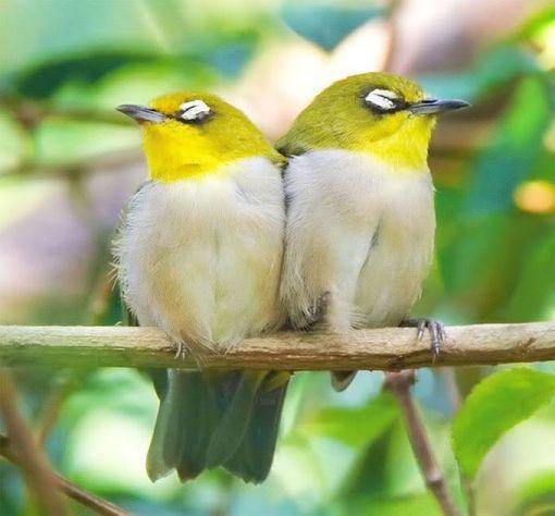 bird-love-p1-07
