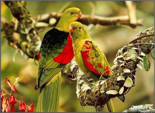 bird-love-p1-14