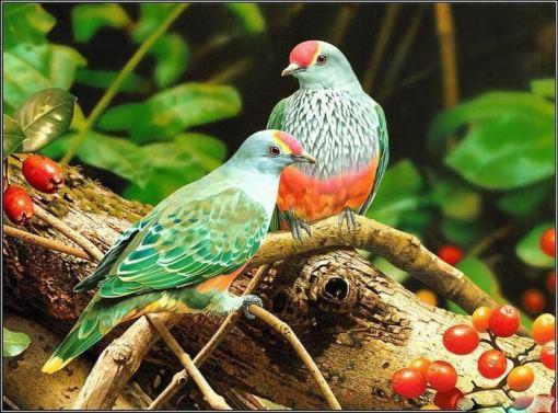 bird-love-p1-15