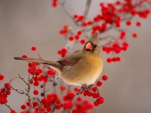 bird-main