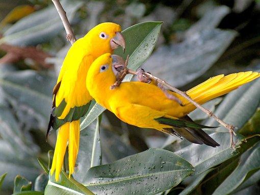 bird04m