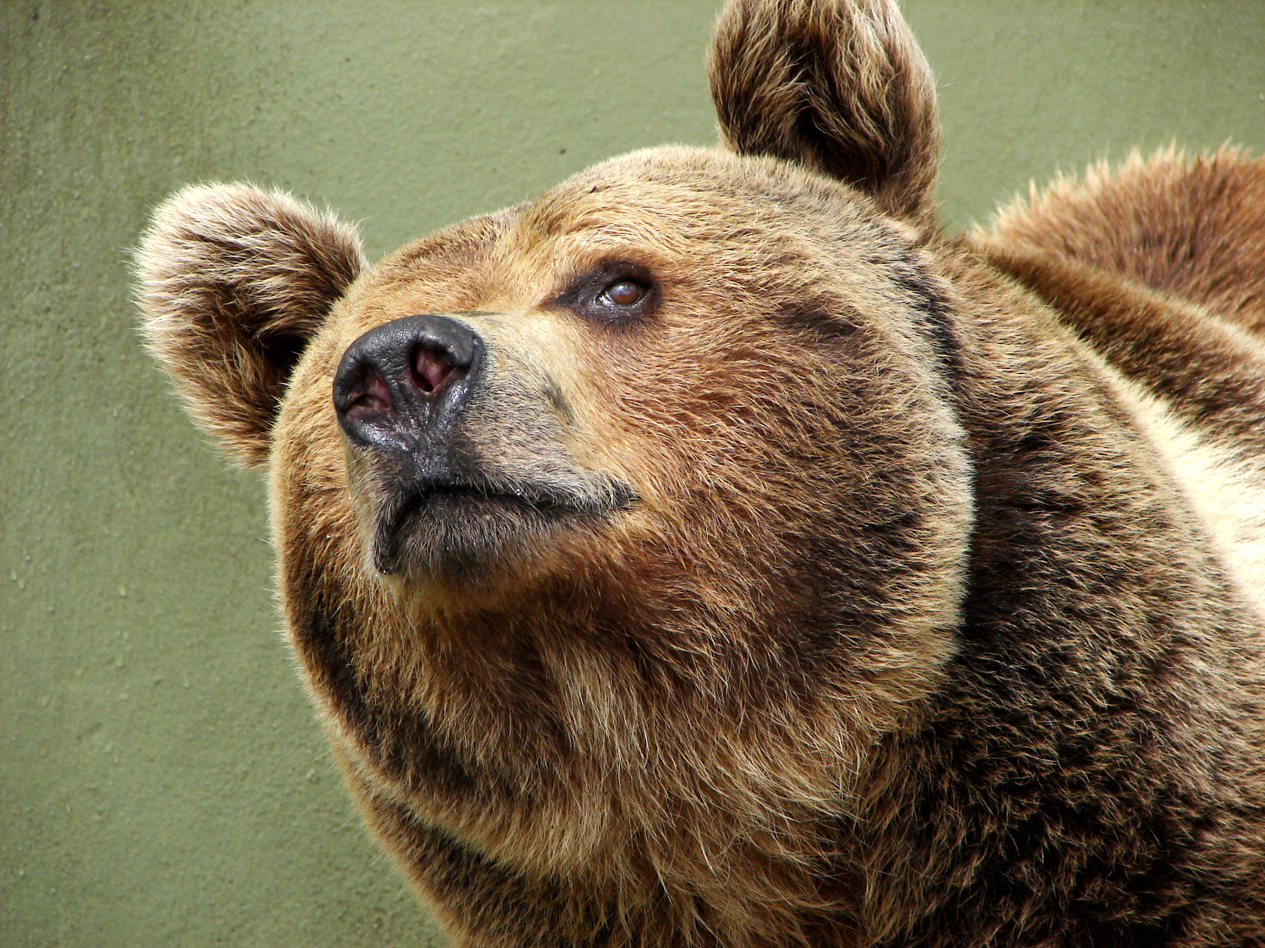 bears - photo #17