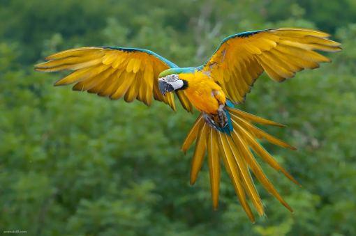 funny-blue-bird