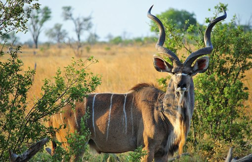 Kudu_Game_Reserve_037