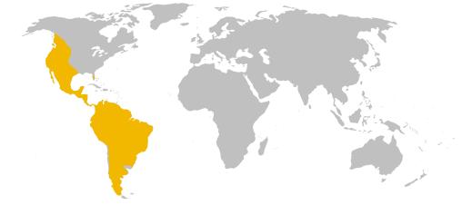 Wiki-Puma_concolor