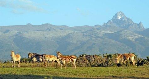 BIG-mount-kenya-white-zebra-7