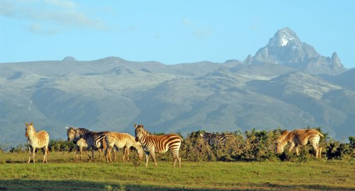 BIG-mount-kenya-white-zebra-7