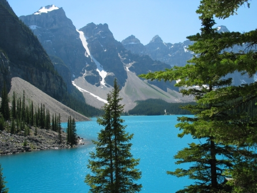 banff-national-park-tree