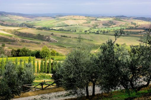 Vineyards-in-Tuscany-Italy